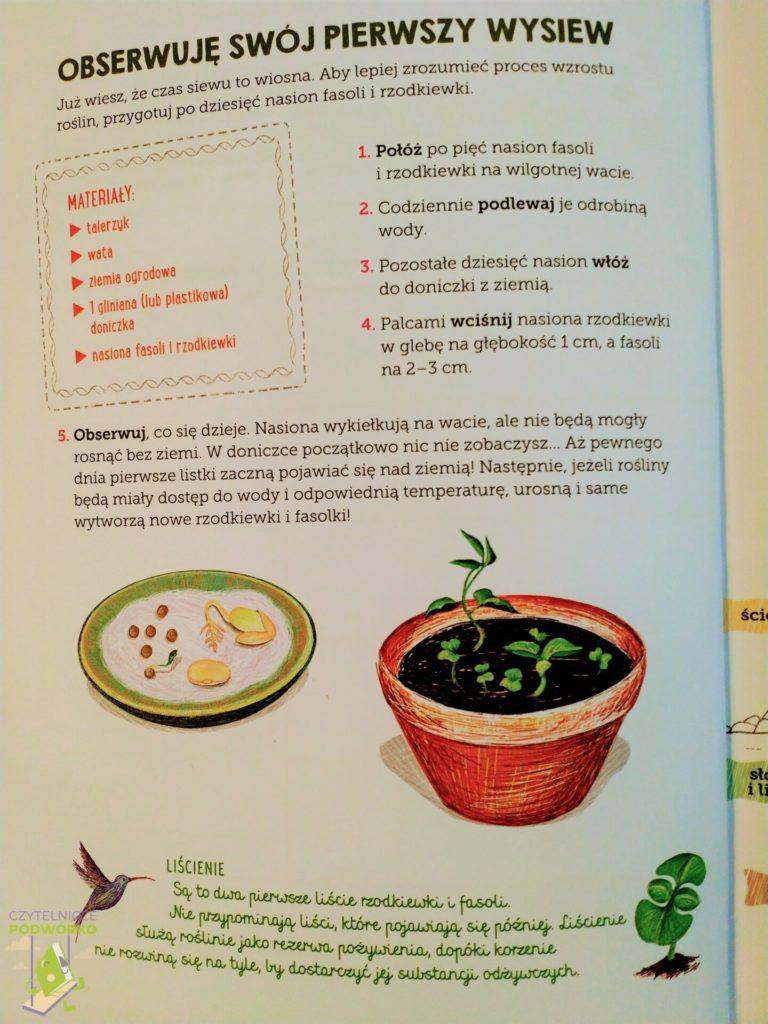 Ogródek warzywny. Mój zeszyt obserwacji przyrodniczych